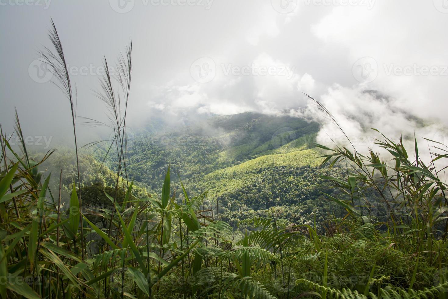 vista panoramica di nebbia sulla montagna dopo la pioggia. foto