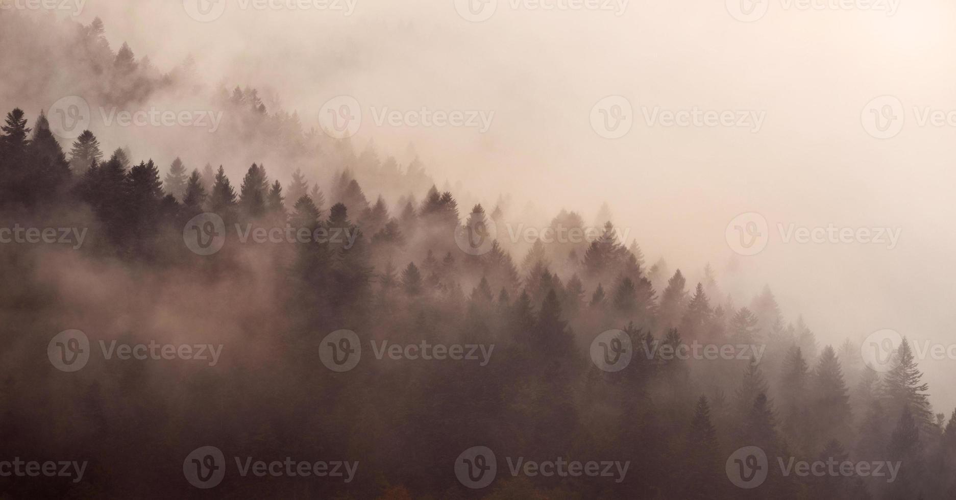 bella nebbia in un carpatico foto