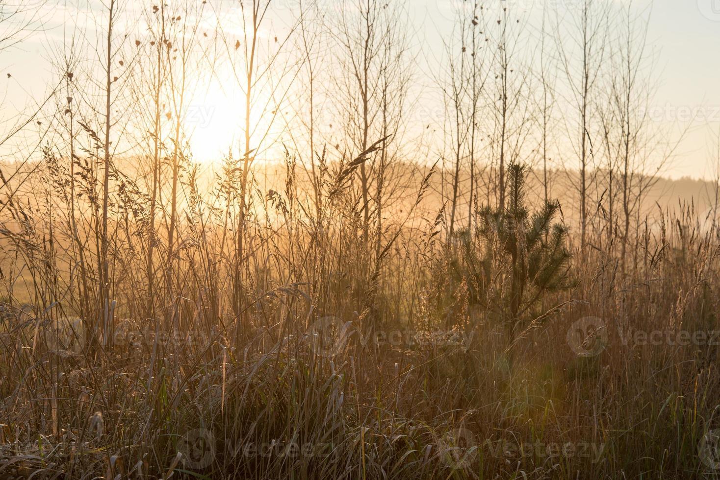 rami degli alberi nebbiosi in condizioni di luce solare intensa foto