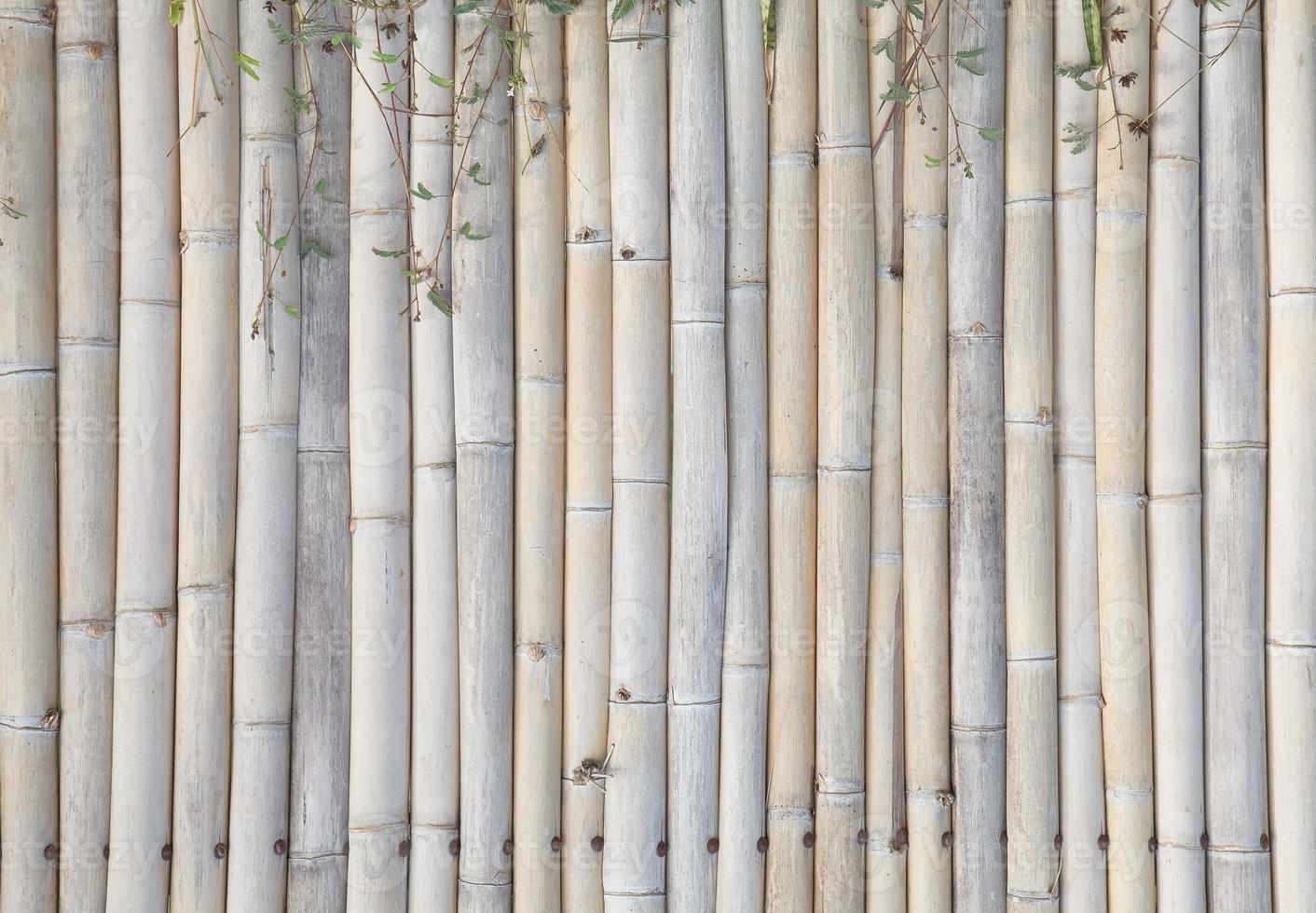 vecchio sfondo di recinzione di bambù foto