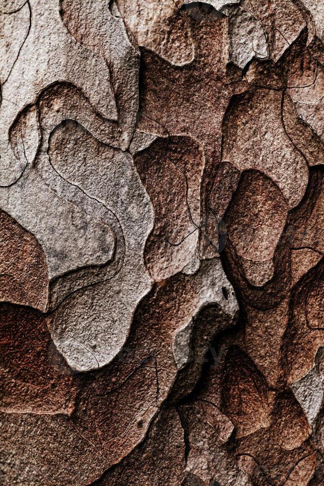struttura in legno. albero di pino macro foto