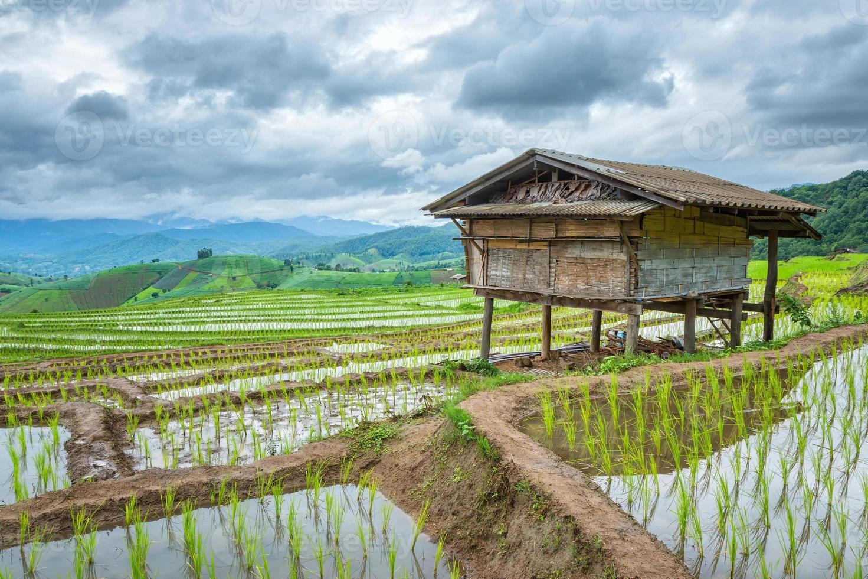 campi di riso sulla montagna. foto