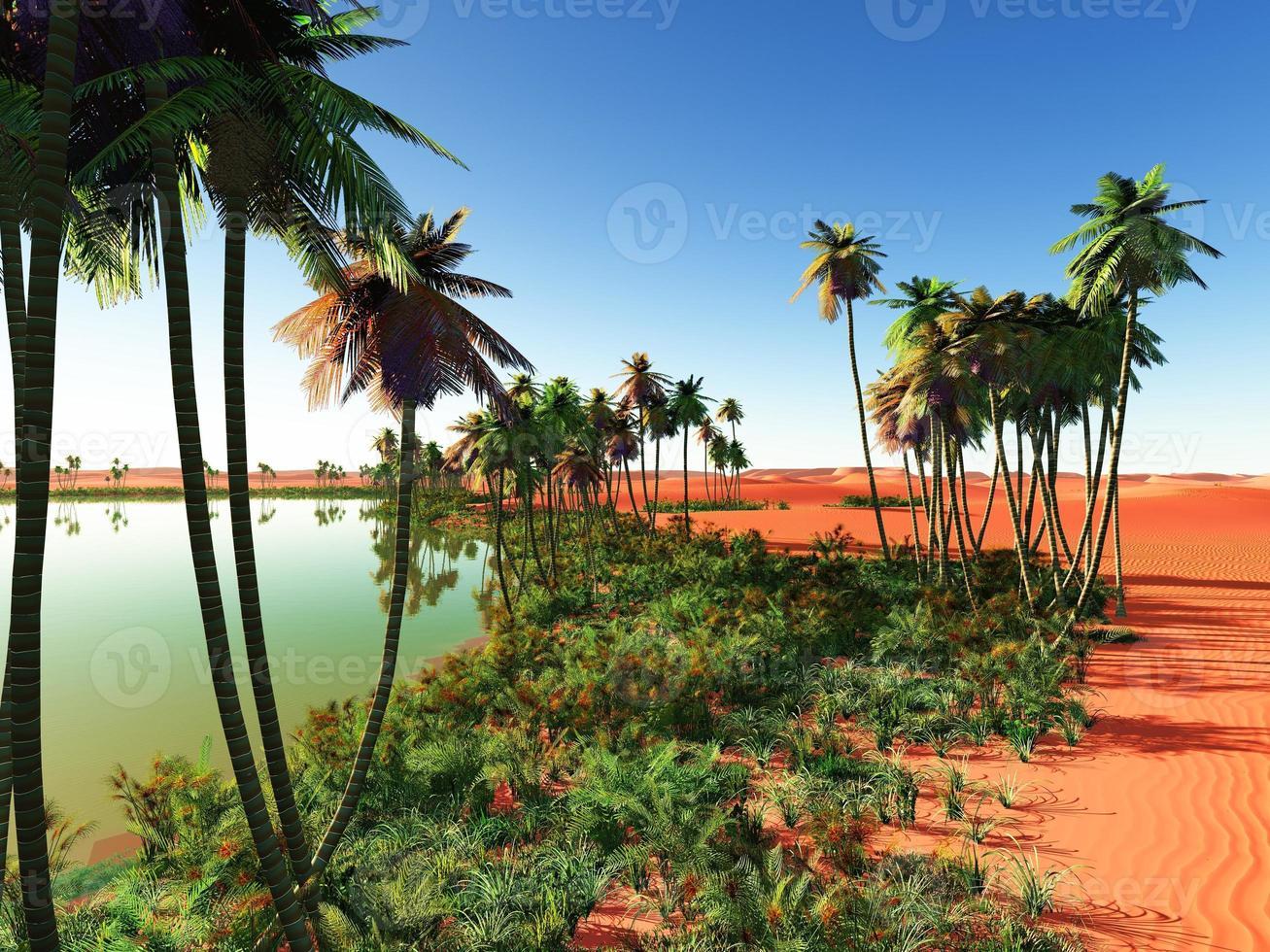 oasi africana foto