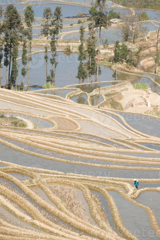 terrazza del riso yuanyang foto