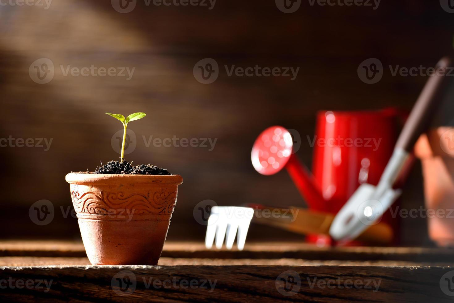 pianta giovane foto