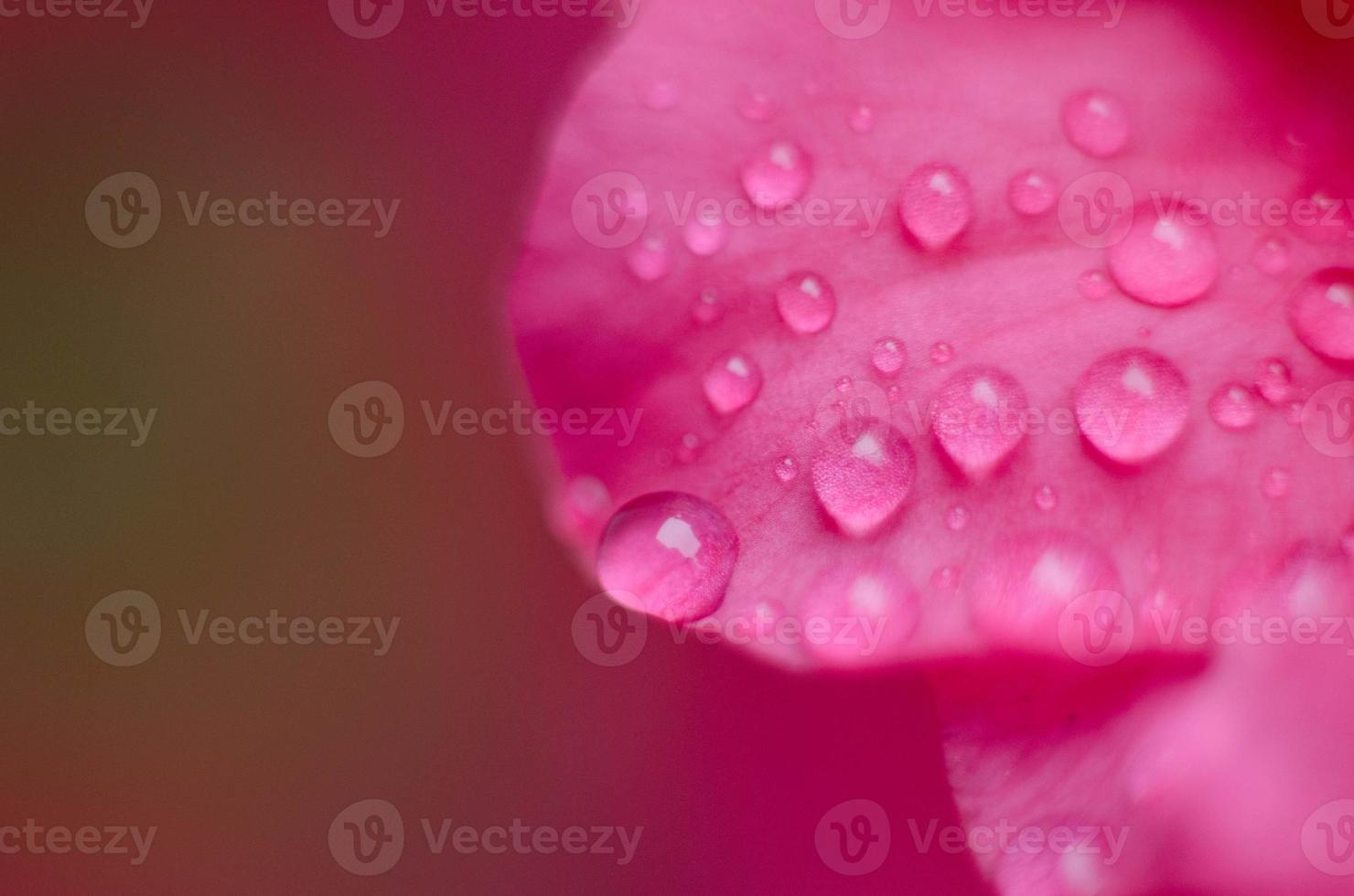 petalo e gocce di pioggia foto