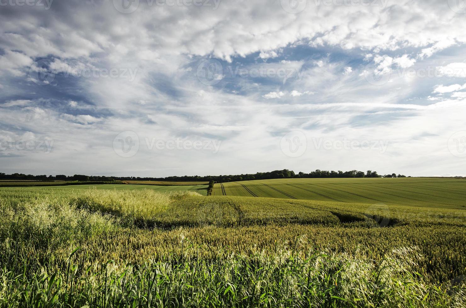 campi coltivati. foto
