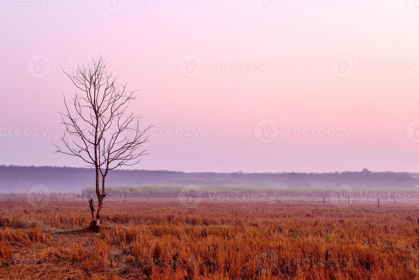solitario albero morente all'alba foto