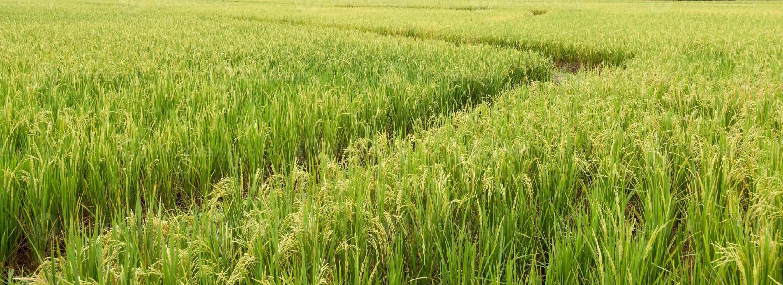 fattoria del riso foto