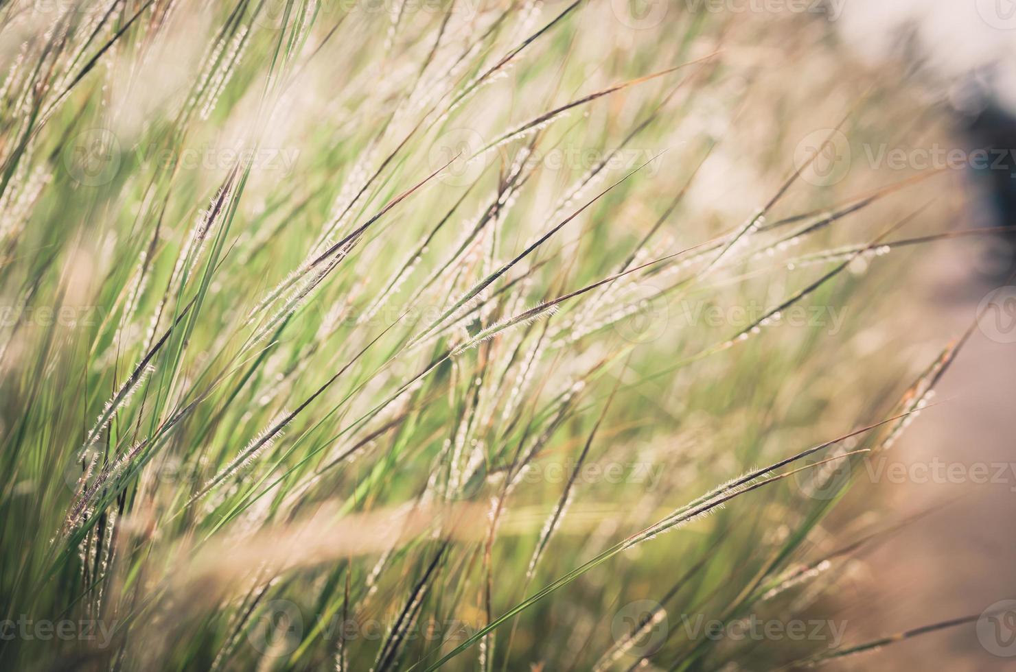 piccolo fiore vintage foto