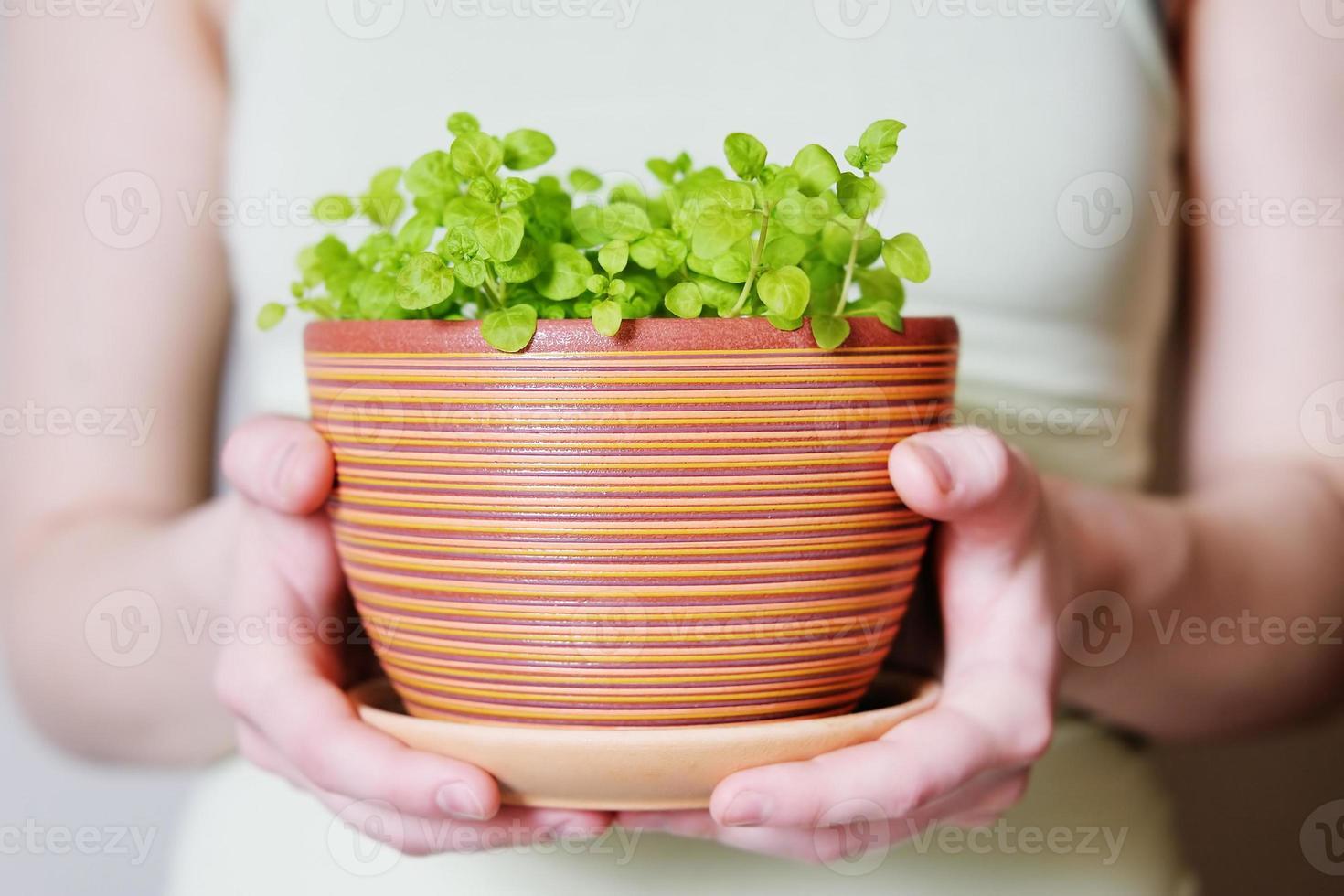 vaso di fiori con germogli foto