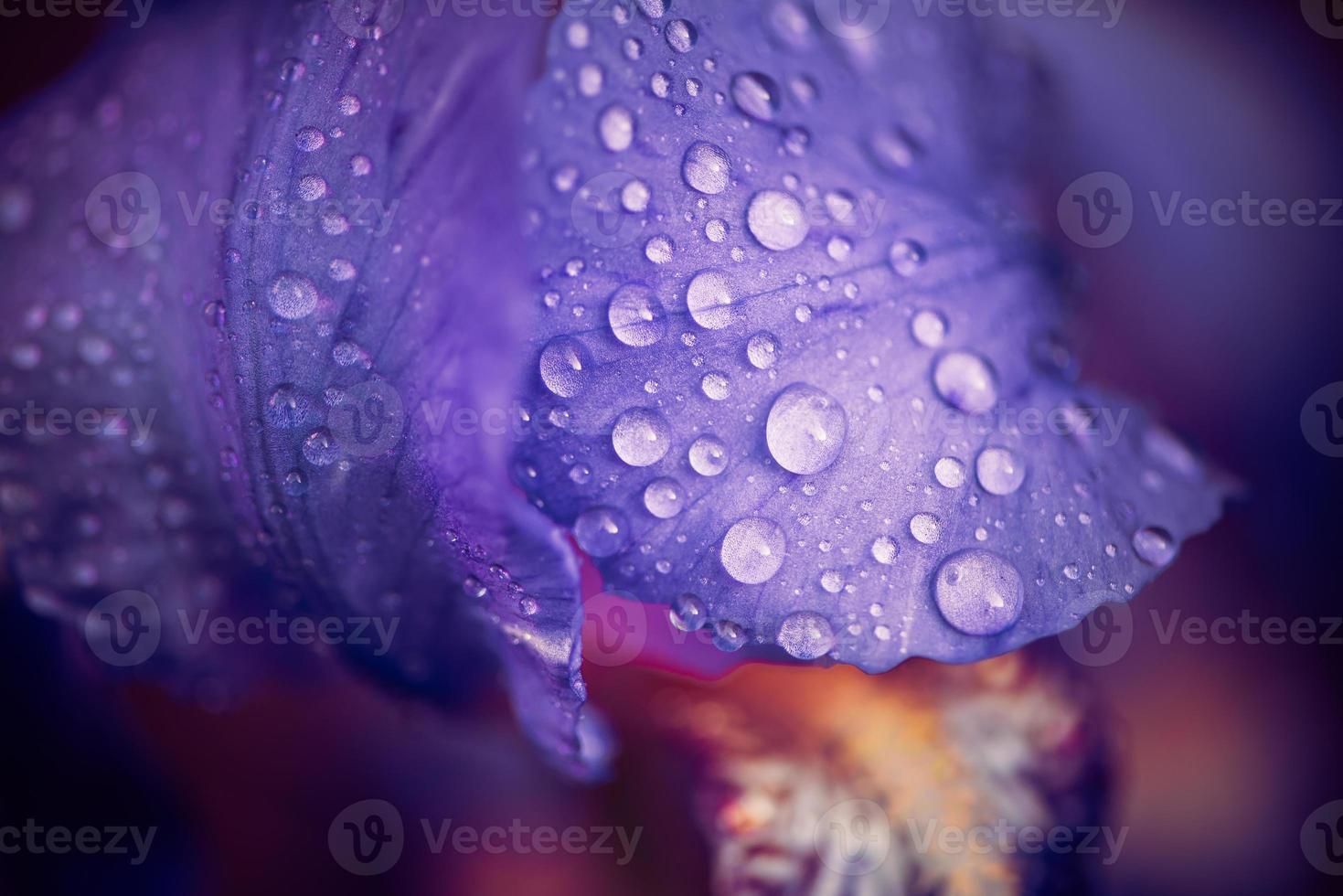 foglie di fiori con gocce foto