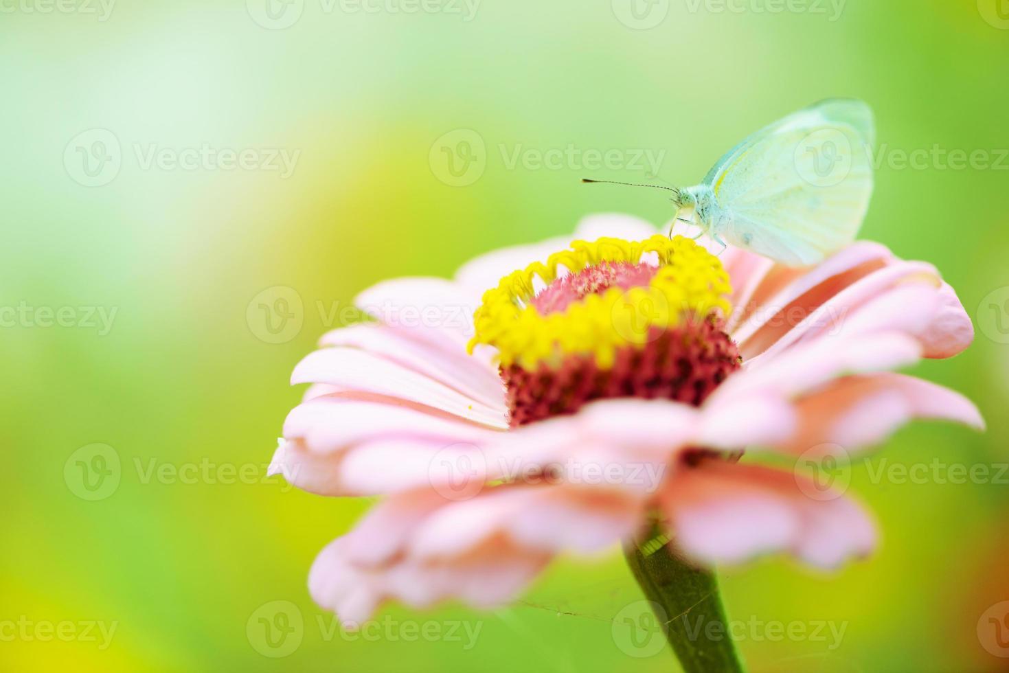 farfalla vola nella natura del mattino foto