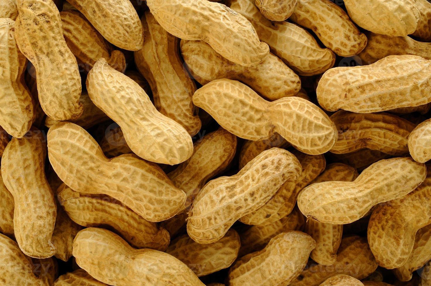 arachidi su sfondo bianco foto