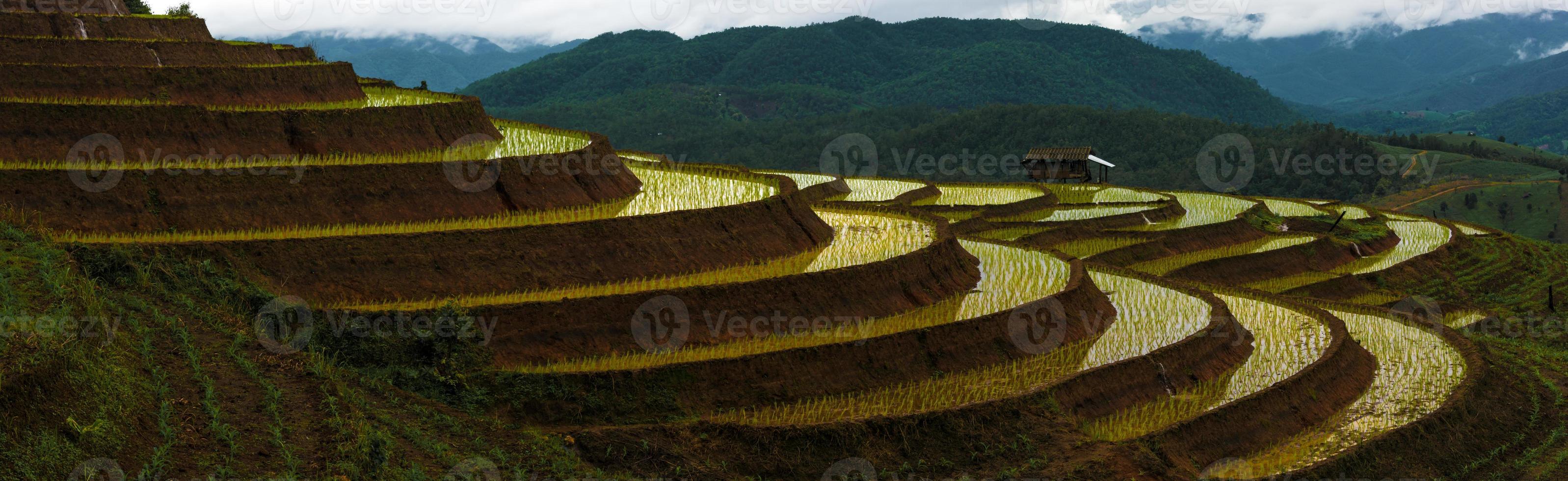 panorama dei campi di riso terrazzati foto