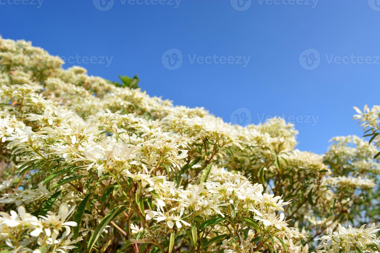 albero bianco e cielo blu foto