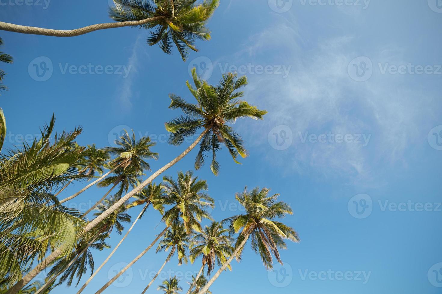 palme contro un cielo blu foto