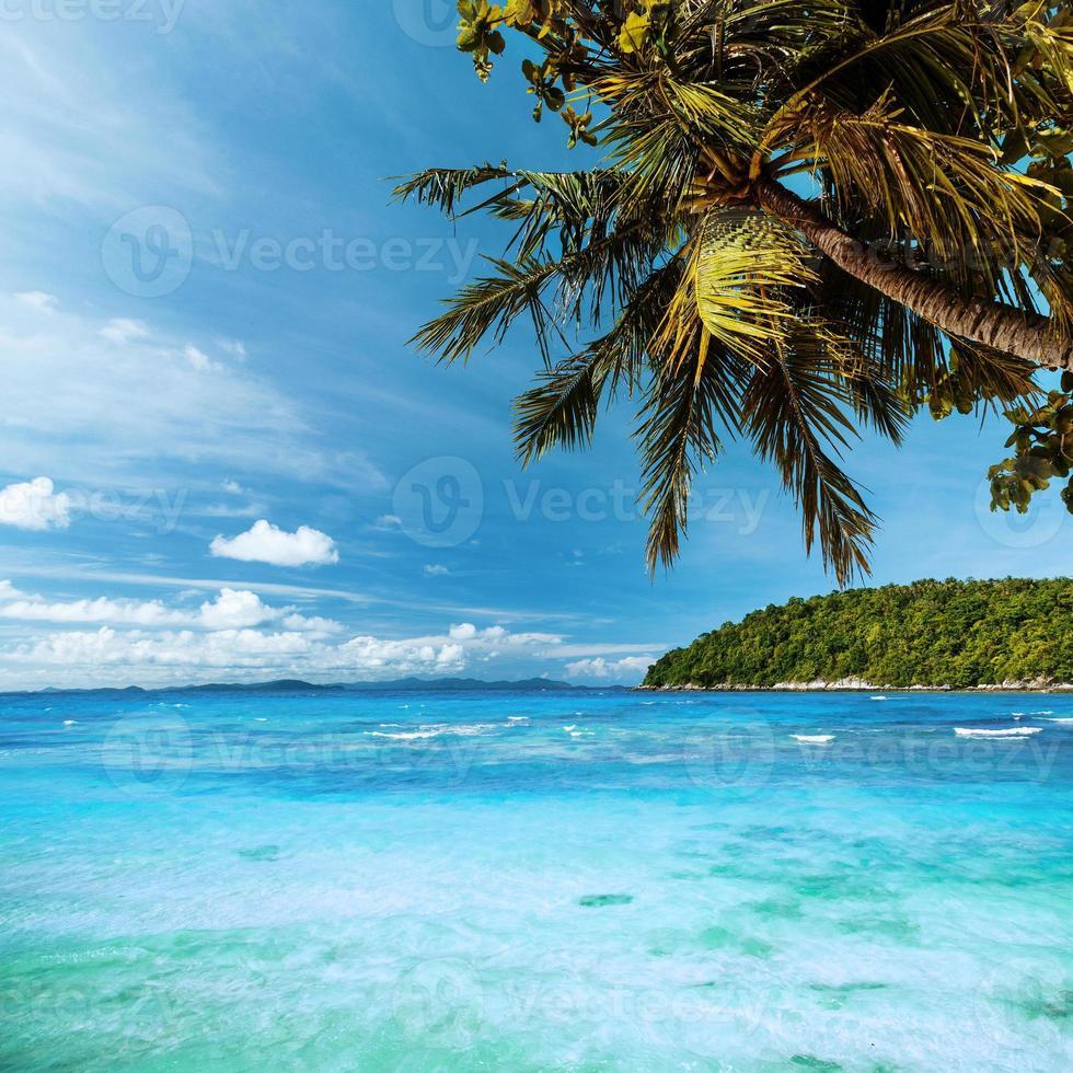 paradiso tropicale foto