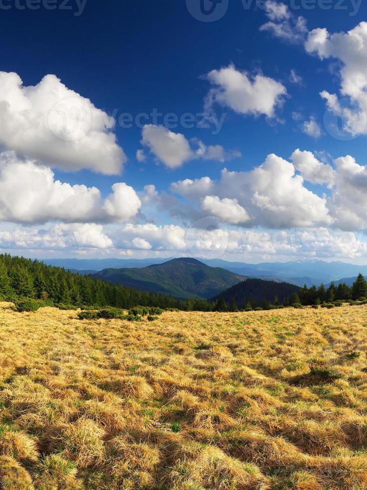 erba e nuvole foto