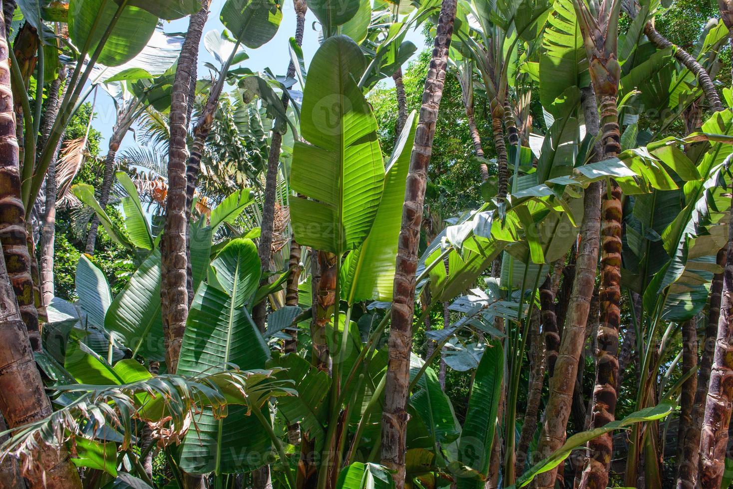 vegetazione tropicale foto