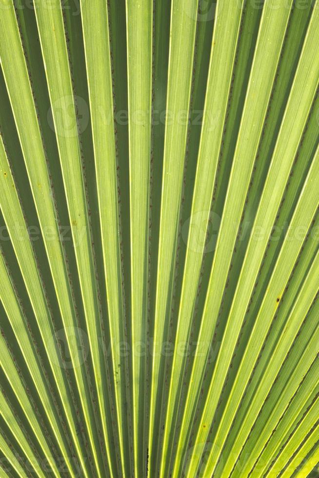 texture: texture foglia verde foto