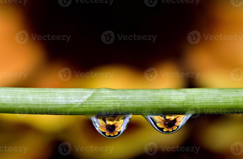 gocce d'acqua macro foto