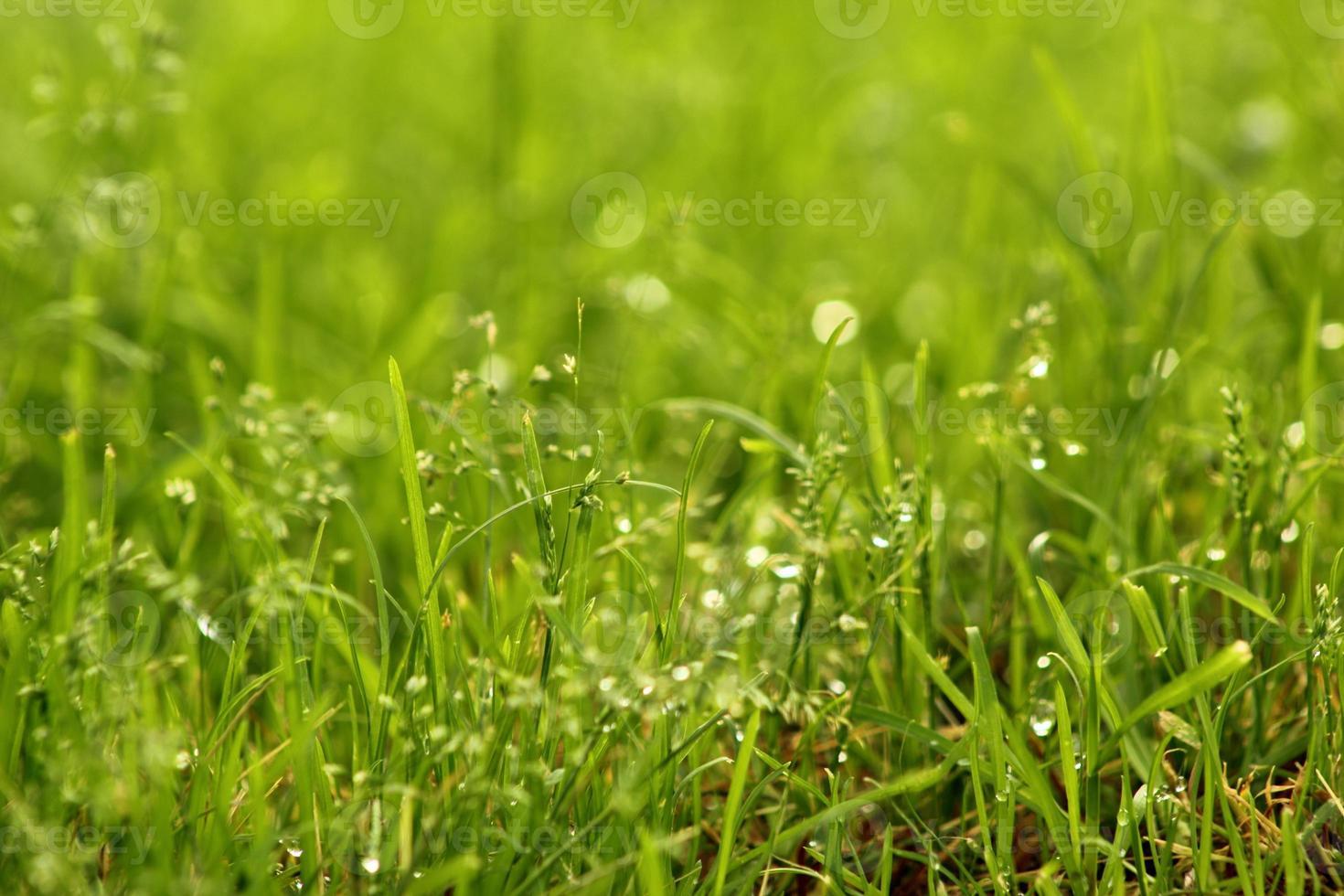 con erba acquatica foto