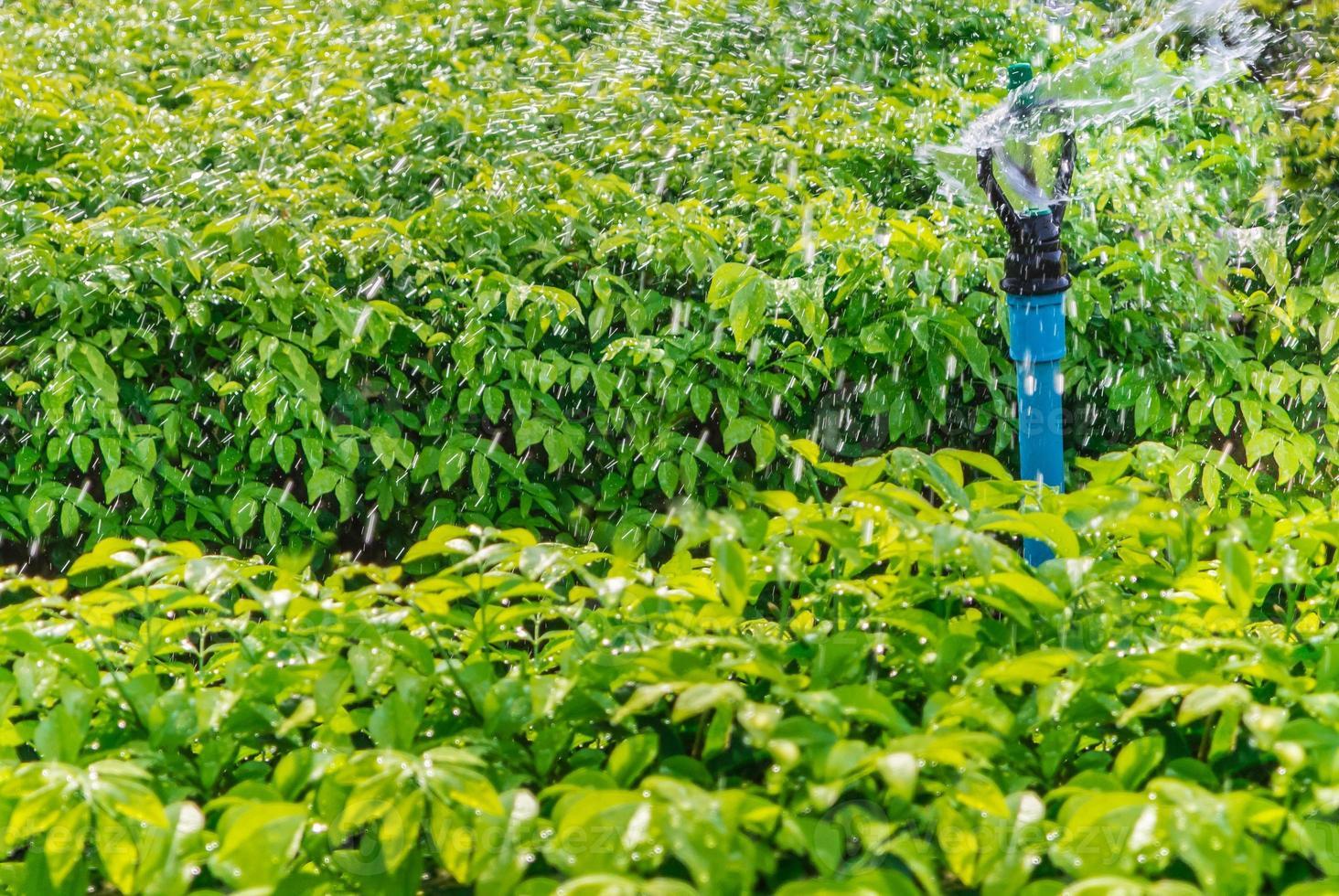 irrigazione della testa dell'irrigatore. foto