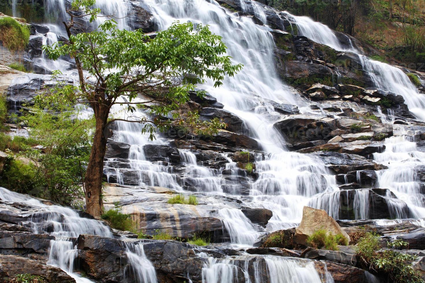 caduta dell'acqua e albero foto