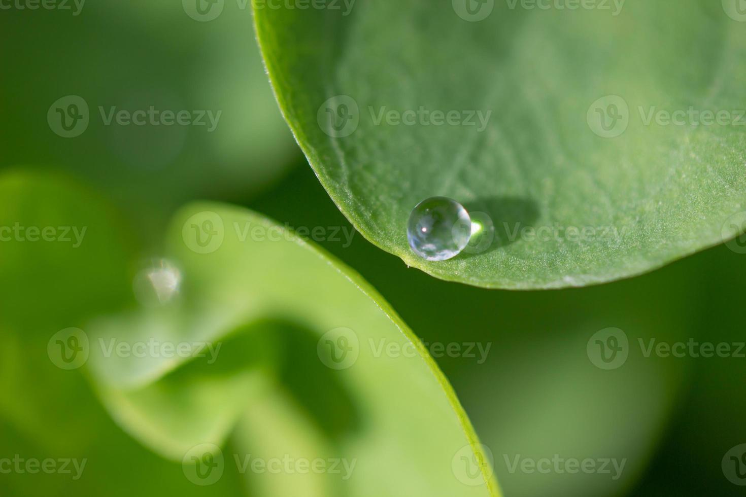 goccia d'acqua su foglia foto