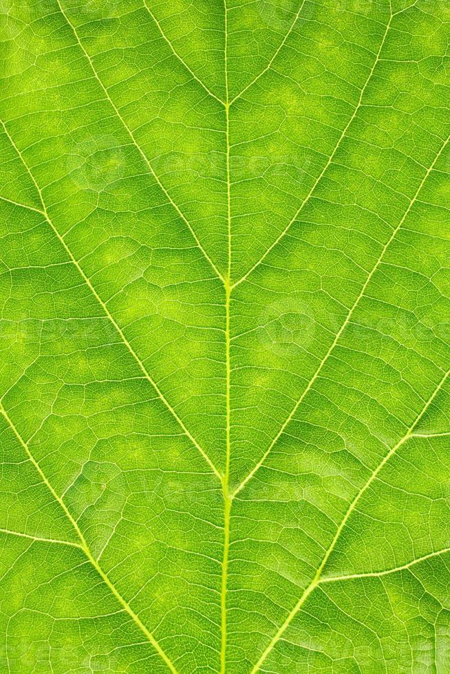 trama della foglia verde foto