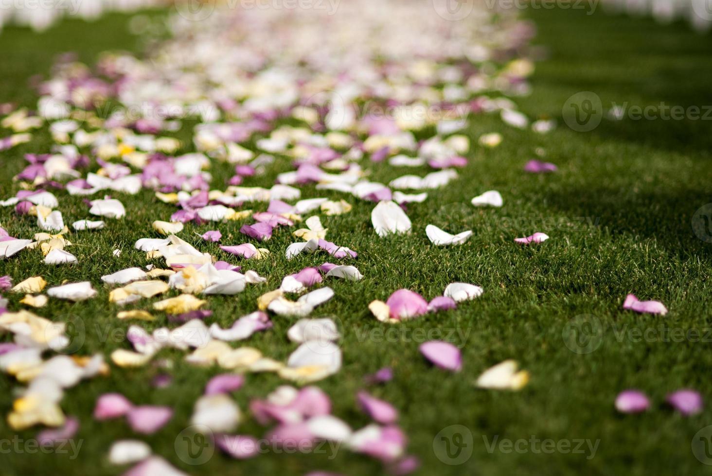 petali di rosa colorati matrimonio foto