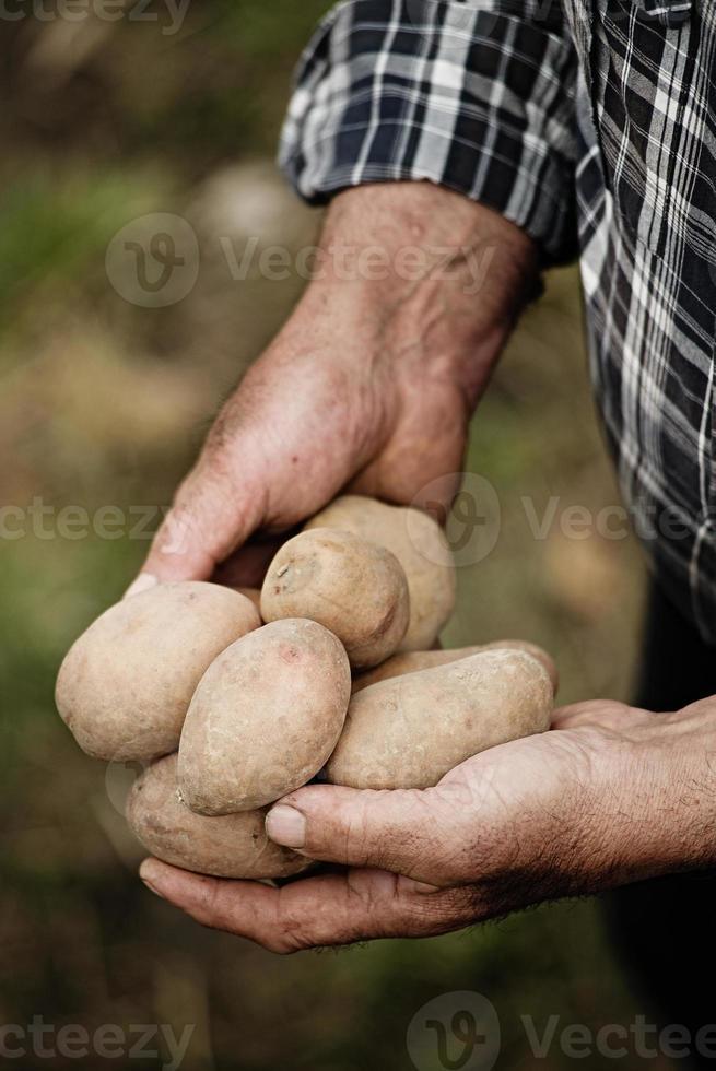 primo piano delle mani maschii che tengono una patata foto