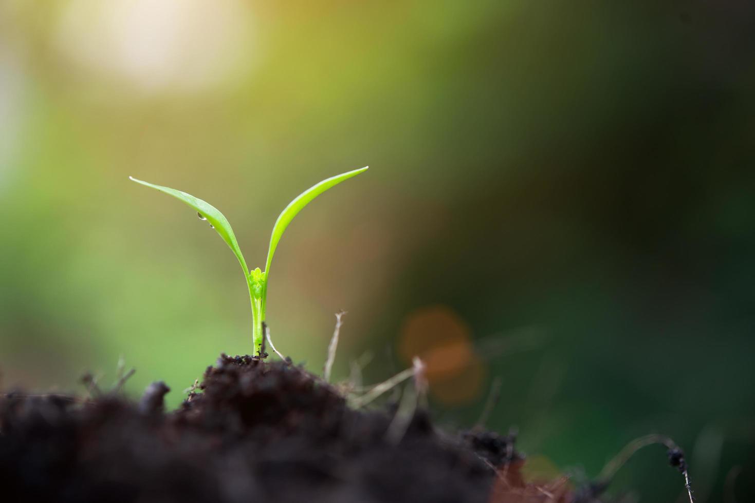 vicino la germogliazione di piante in natura foto
