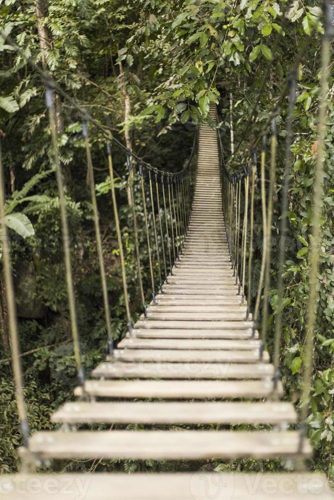 ponte di corde nella foresta pluviale foto