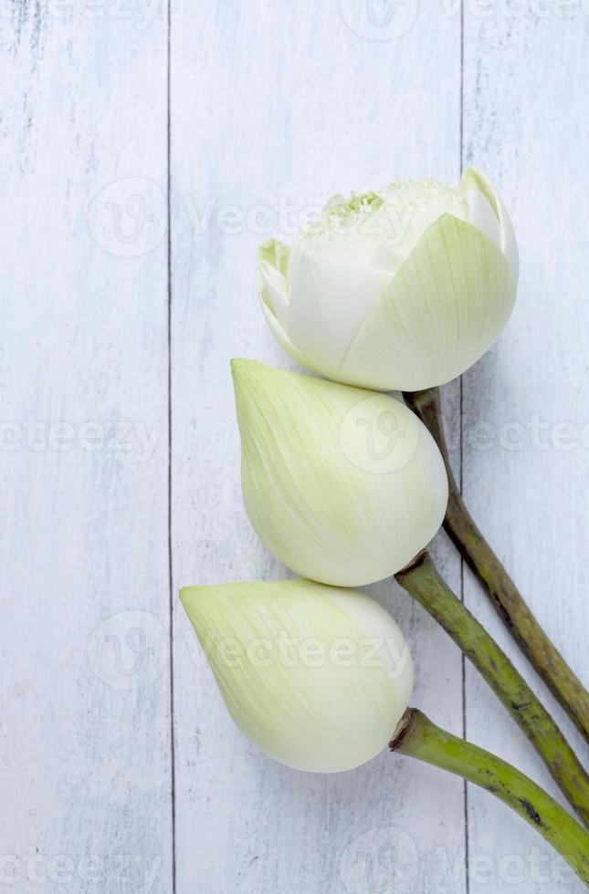 primo piano fiore di loto bianco sul pavimento in legno bianco foto