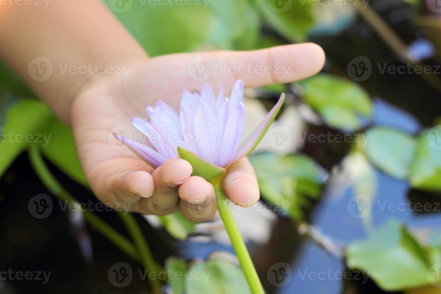 loto viola nella mano foto