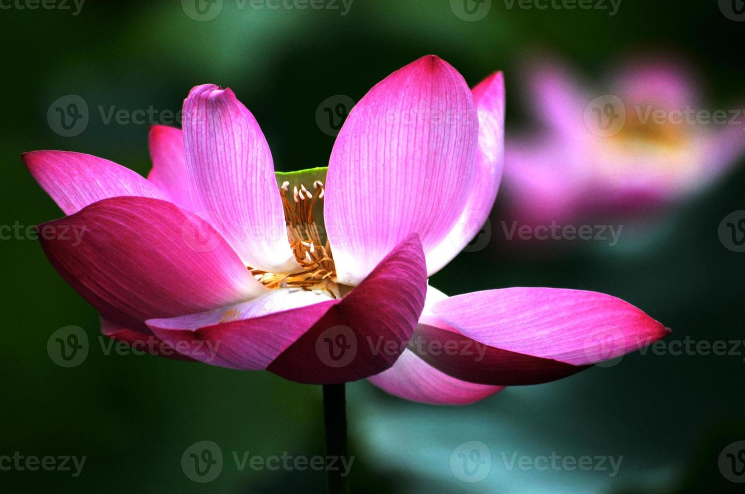 bellezza nella natura foto