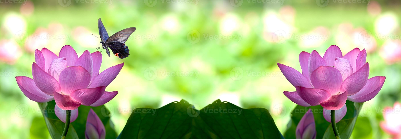 bella rosa ninfea o fiore di loto in stagno foto