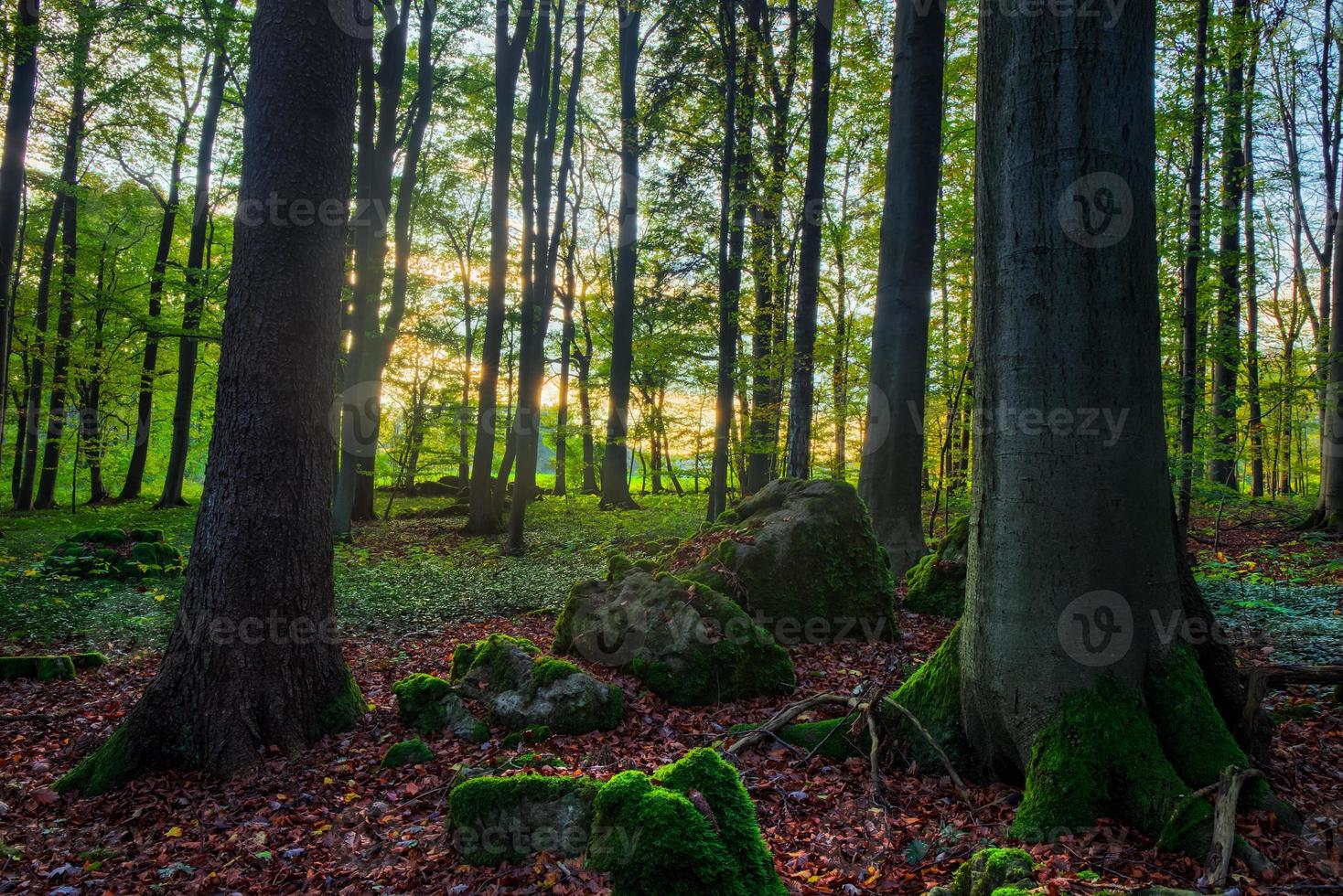 incantevole autunno foto