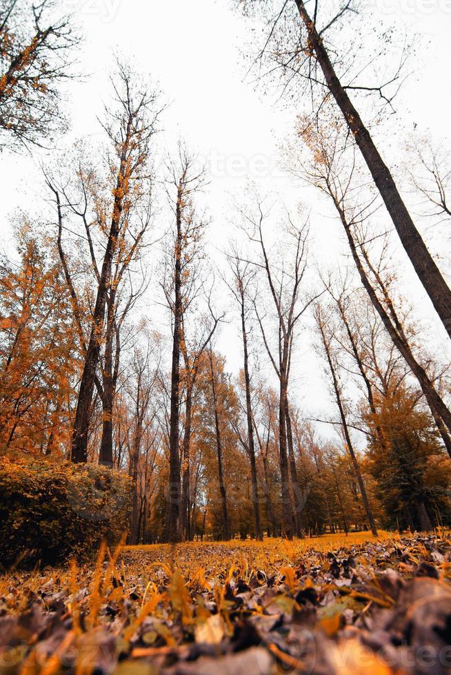 autunno piovoso foto