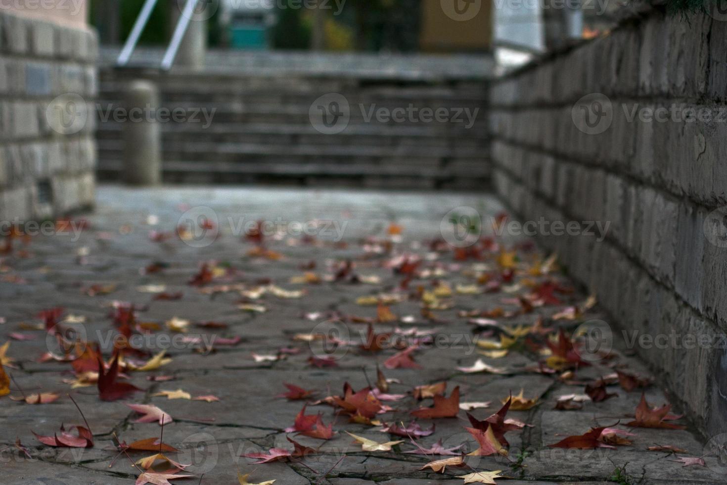 foglie d'autunno foto