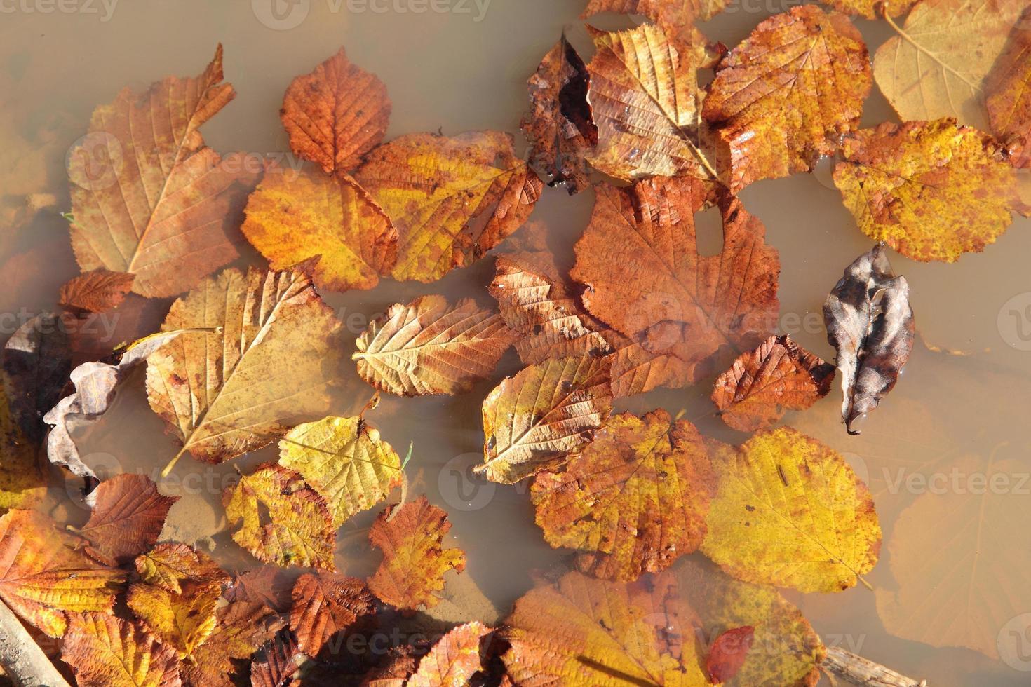 foglie in una pozzanghera foto