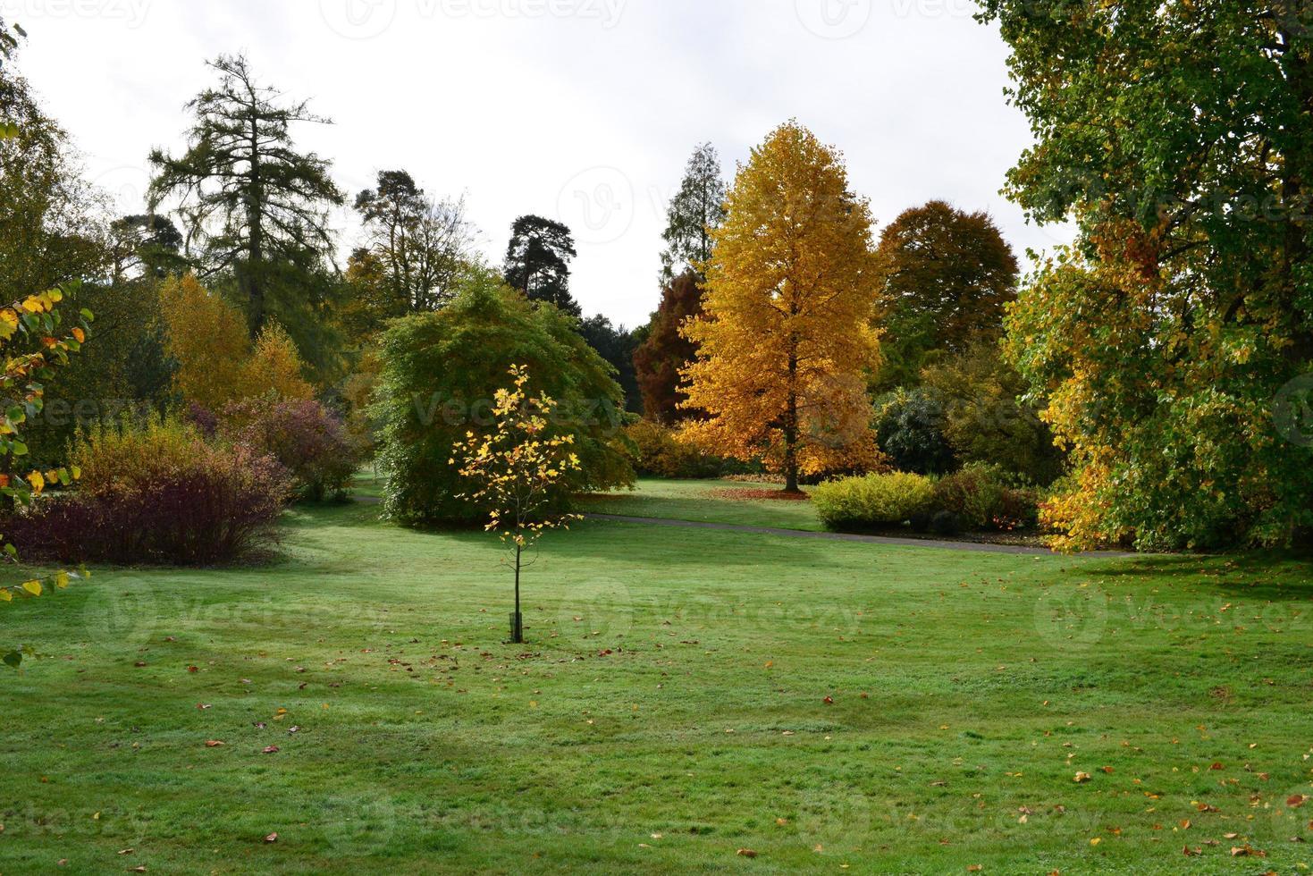 autunno inglese foto