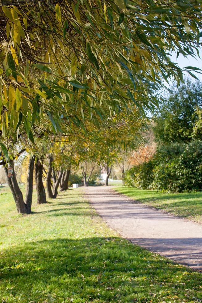 parco d'autunno foto