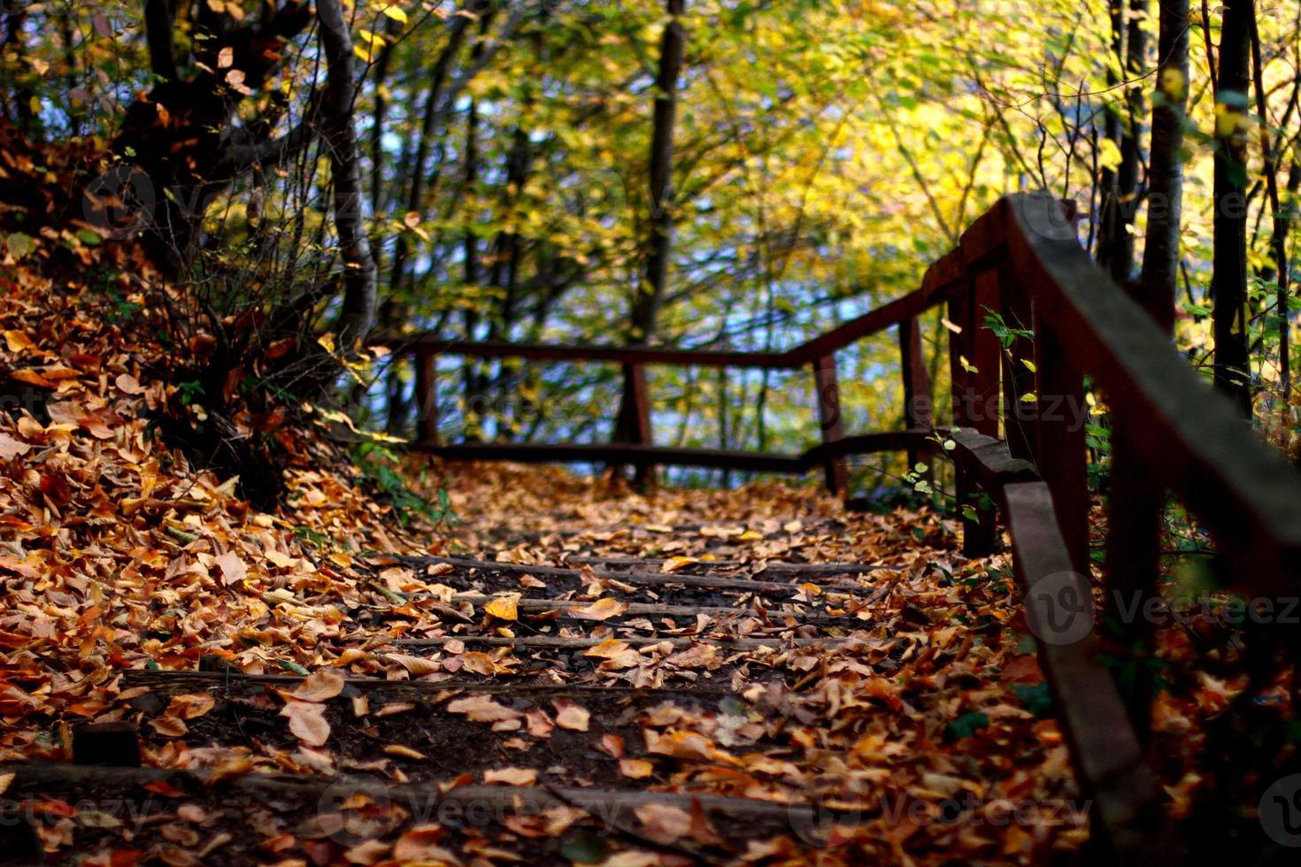 strada d'autunno foto