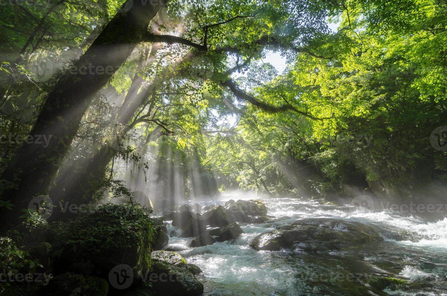 burrone e raggi di sole che brillano tra i rami degli alberi foto