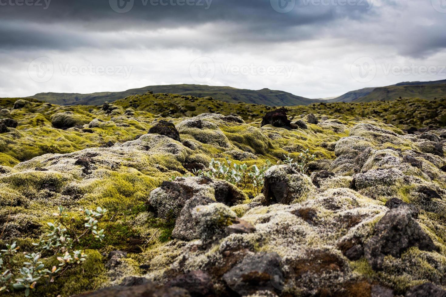 Islanda, campo di muschio con muschio. foto