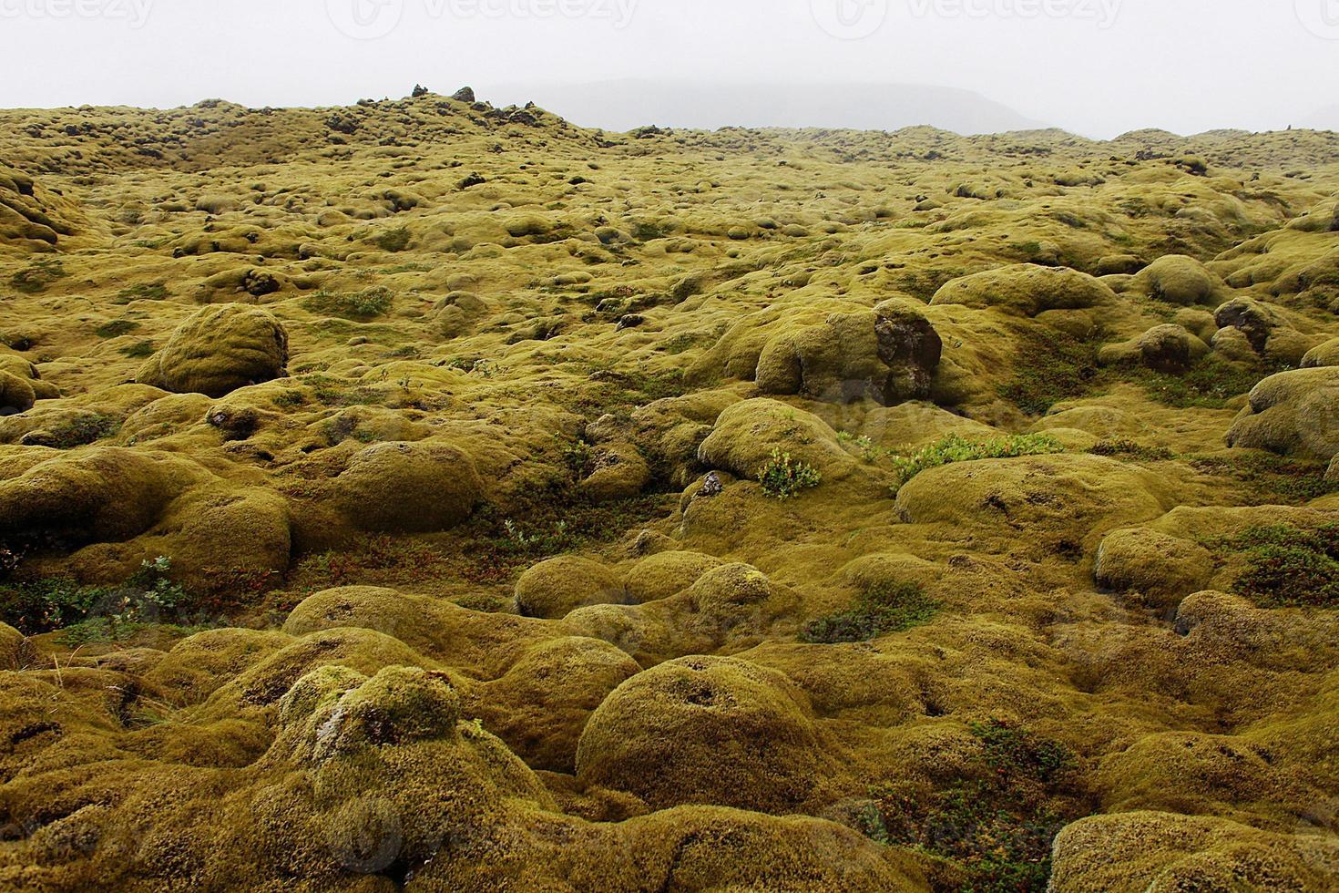 campo di lava di eldhraun nel sud dell'islanda foto