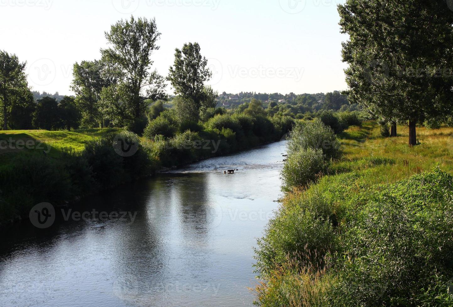 fiume ropa, salici e polder a jaslo foto